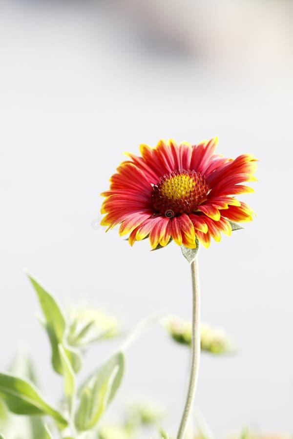 flower wild στοκ φωτογραφία με δικαίωμα ελεύθερης χρήσης