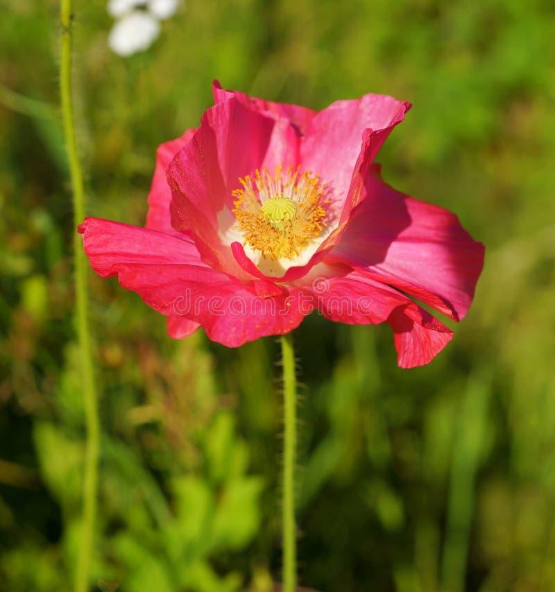 Flower, Wildflower, Flora, Plant Free Public Domain Cc0 Image