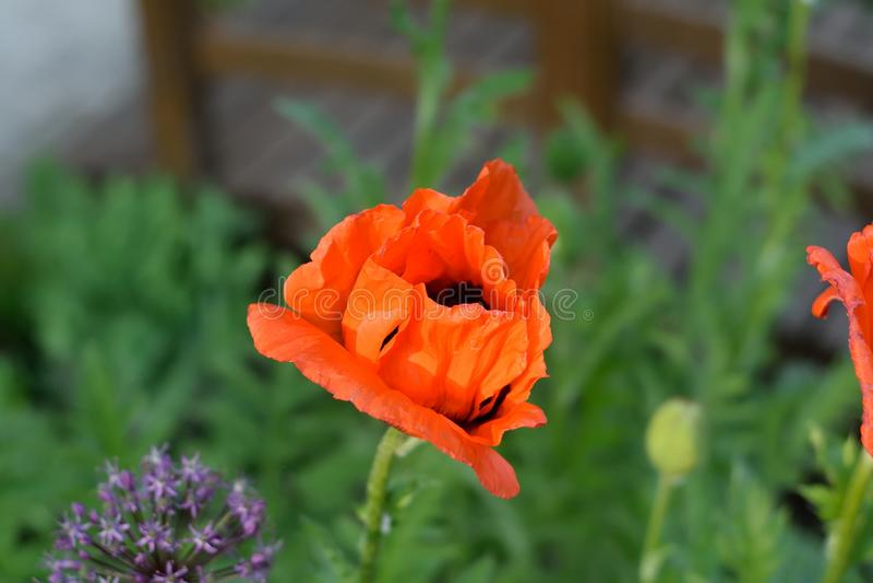 Flower, Wildflower, Plant, Flora Free Public Domain Cc0 Image