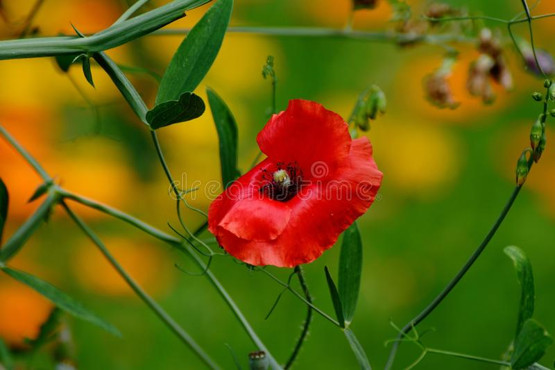Flower, Wildflower, Vegetation, Flora Free Public Domain Cc0 Image