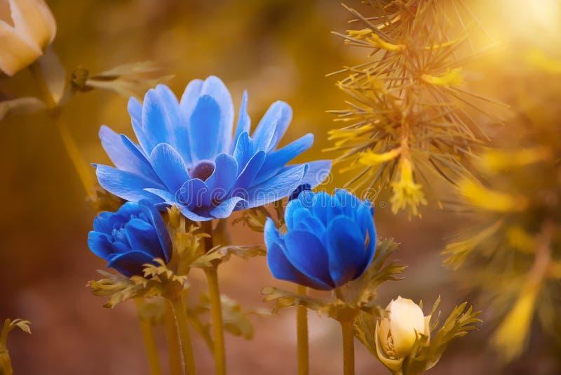 Flower, Wildflower, Yellow, Flora Free Public Domain Cc0 Image