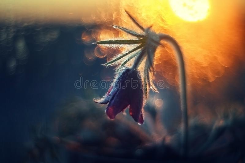 Download Flower By The Window At Sunset Stock Image - Image of sunlight, summer: 109060183