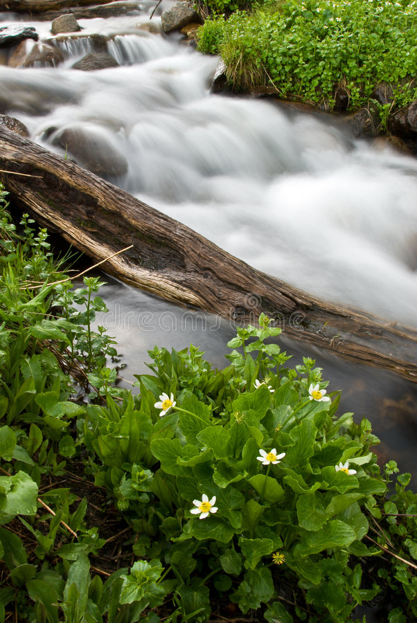 Free Flower With Cascade Stock Photography - 4518782