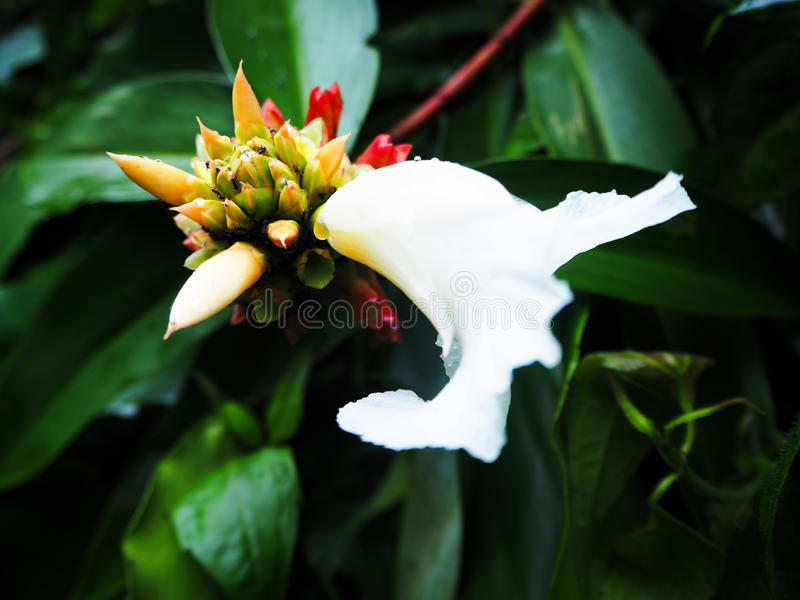 Flower in the woods royalty free stock photography