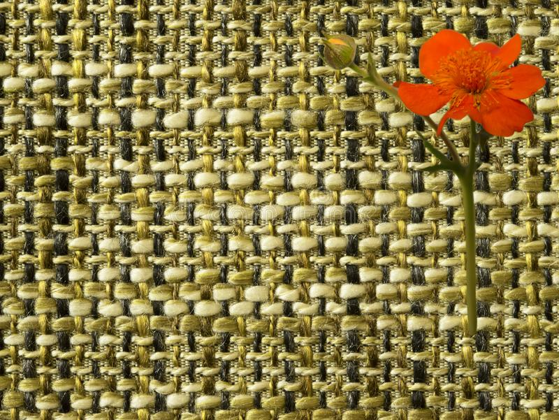 Flower woven fabric structure , macro. Flower on woven fabric structure , macro royalty free stock photo