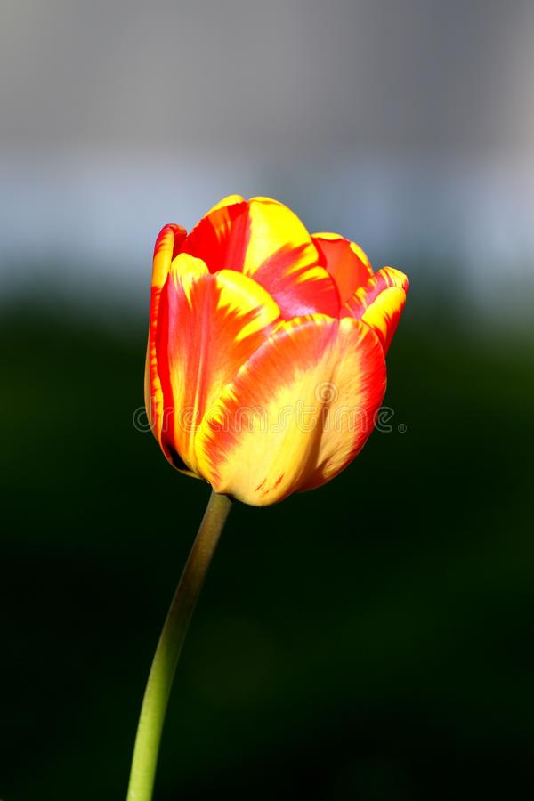 Flower, Yellow, Bud, Plant stock images