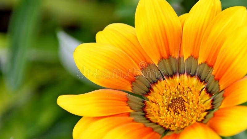 Flower, Yellow, Flora, Close Up royalty free stock photos