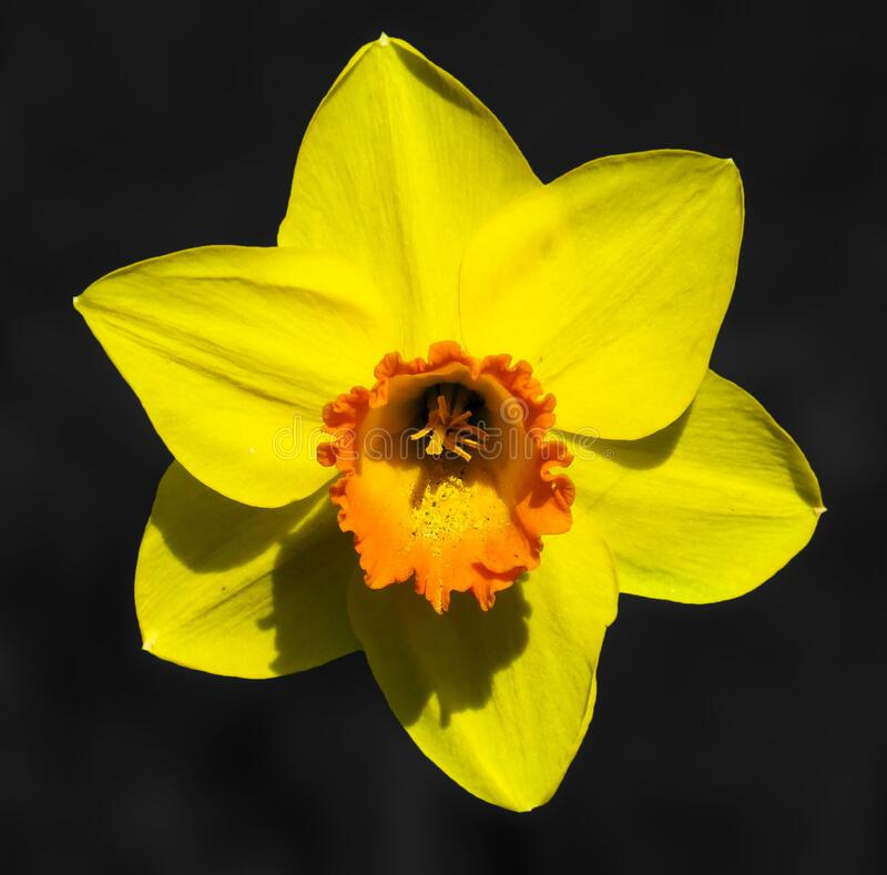 Flower, Yellow, Flora, Flowering Plant royalty free stock photos