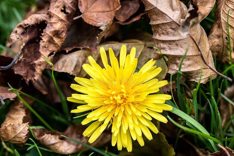 Flower, Yellow, Flora, Plant Free Public Domain Cc0 Image