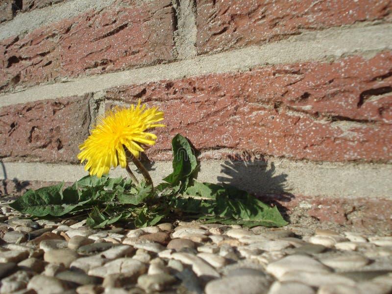 Flower, Yellow, Flora, Plant stock image