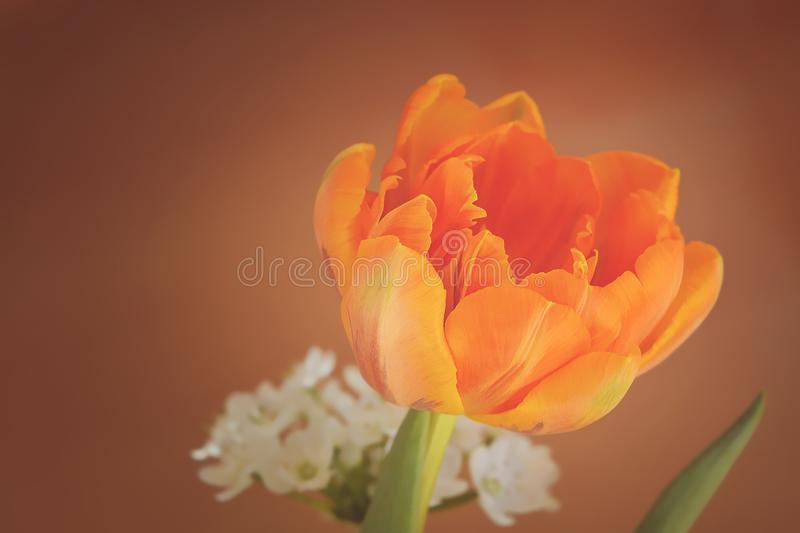 Flower, Yellow, Flowering Plant, Orange stock photo