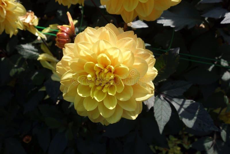 Flower, Yellow, Flowering Plant, Plant Free Public Domain Cc0 Image