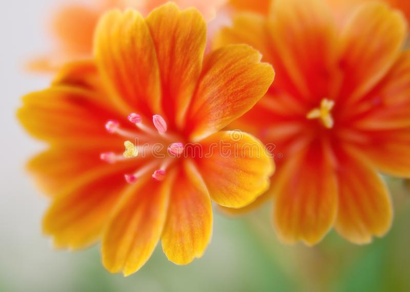 Flower, Yellow, Orange, Flora stock photo