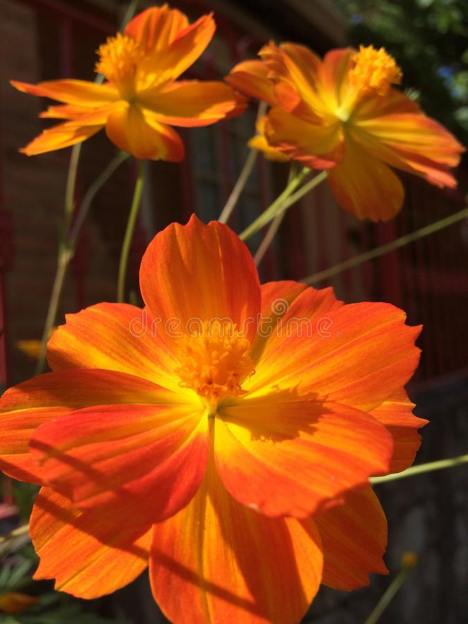 Flower, Yellow, Orange, Flowering Plant Free Public Domain Cc0 Image