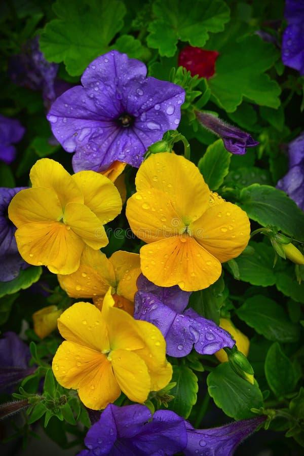 Flower, Yellow, Plant, Flora royalty free stock photo
