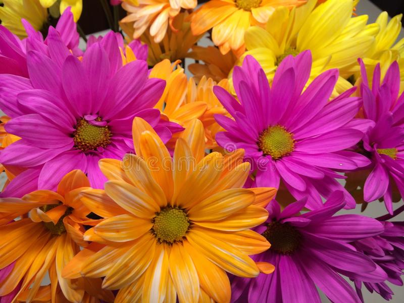 Flower, Yellow, Purple, Flora stock images