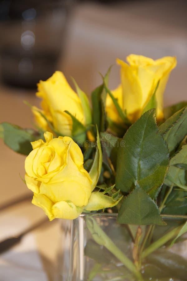 Flower, Yellow, Rose Family, Rose stock image
