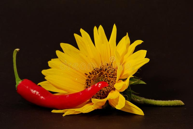 Flower, Yellow, Still Life Photography, Petal royalty free stock photography