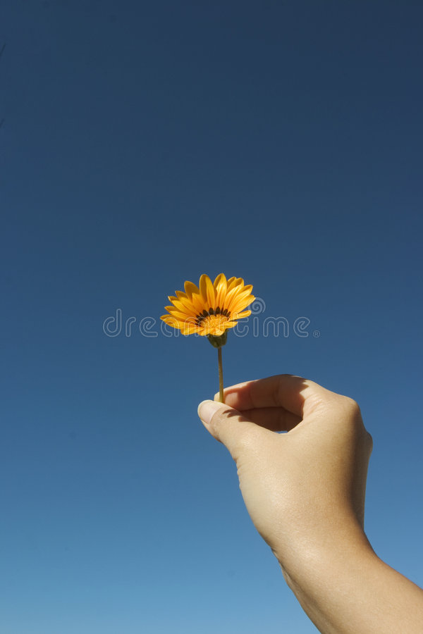 Flower For You. Symbol of Peace stock photo