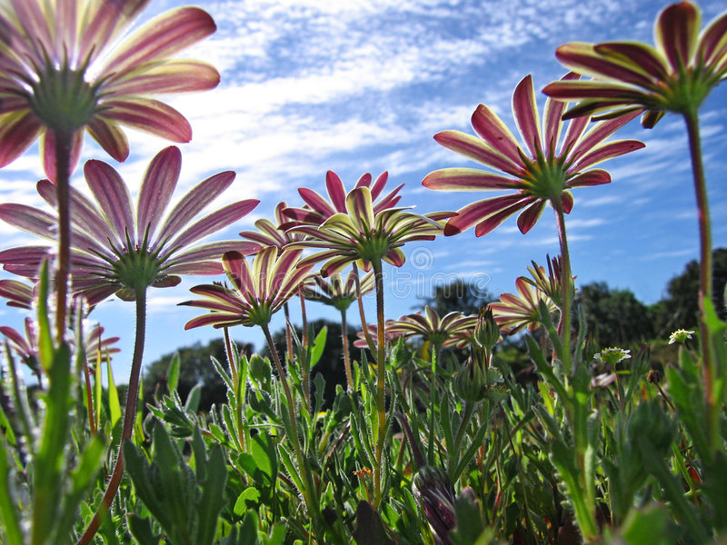 flower5 άγρια περιοχές στοκ εικόνες