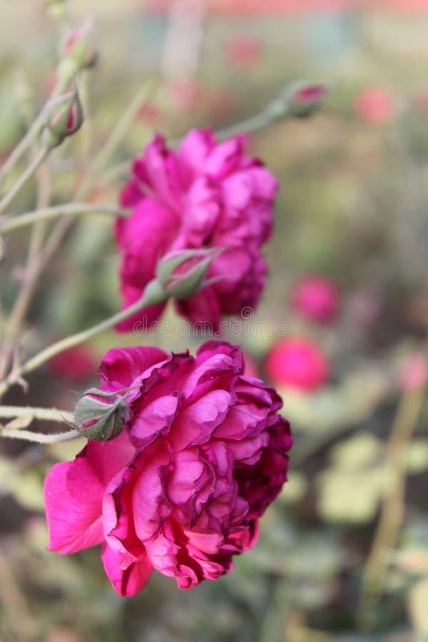 flowera photos libres de droits