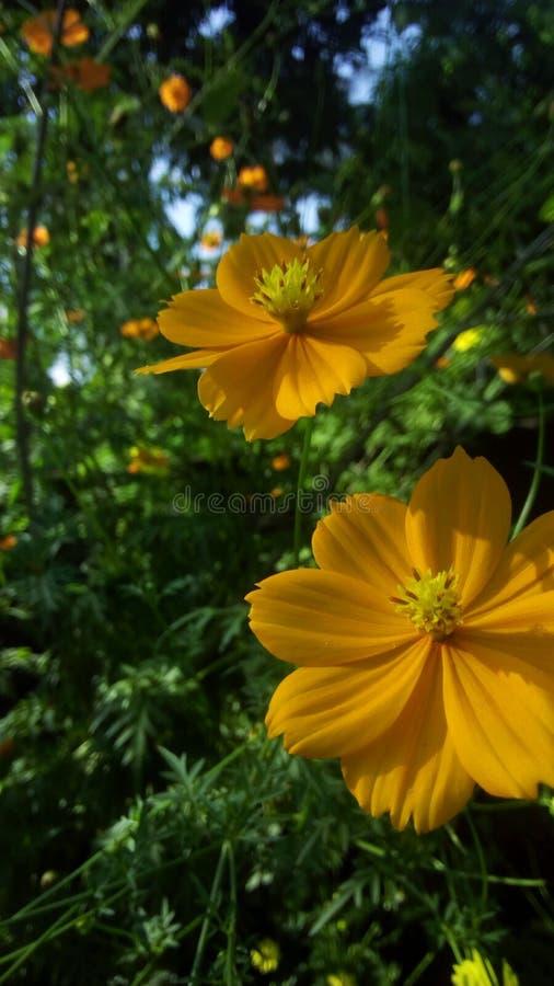 flowera image libre de droits