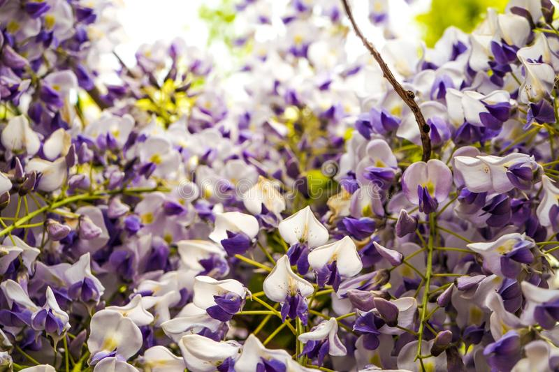 flowera de la rota que florece en un parque fotografía de archivo