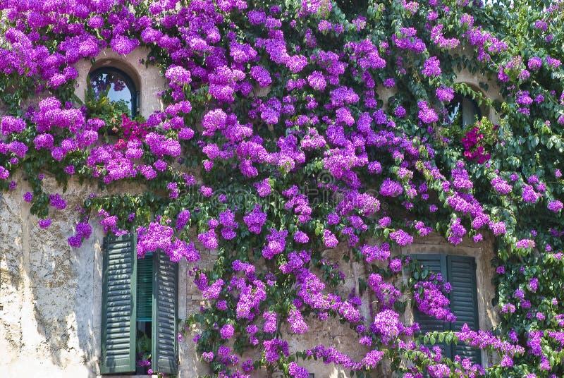 flowerage стоковое изображение rf