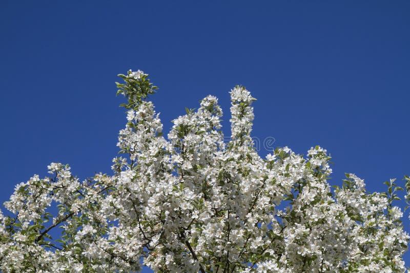Flowerage imagenes de archivo