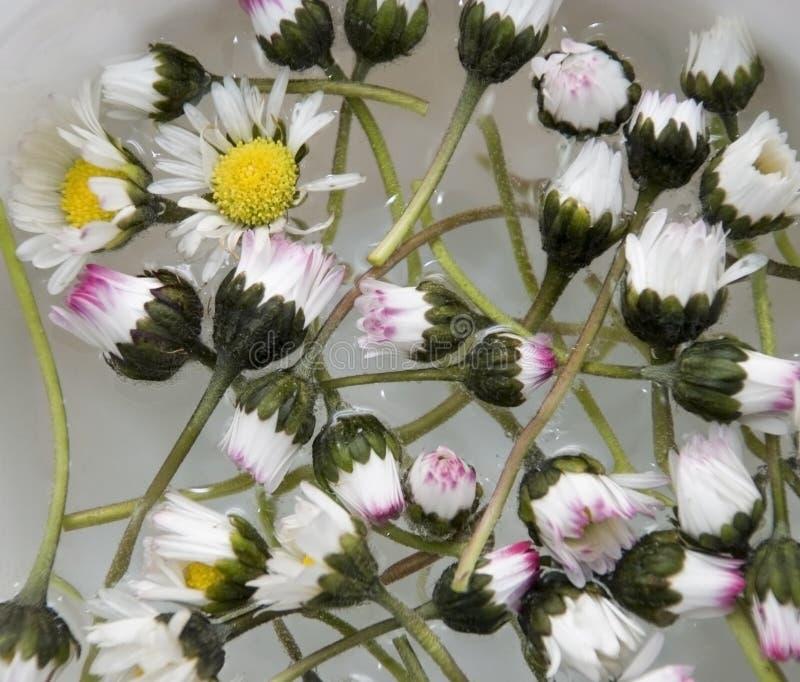 Flowerage in acqua fotografia stock libera da diritti