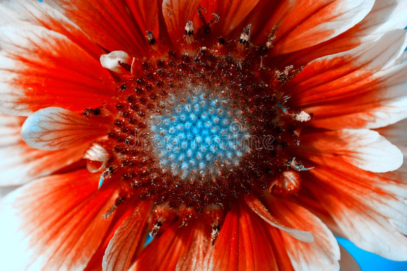 Flowerbackground, gardenflowers Mooie enige Bloemclose-up Horizontale de kunstachtergrond van de zomerbloemen stock afbeeldingen