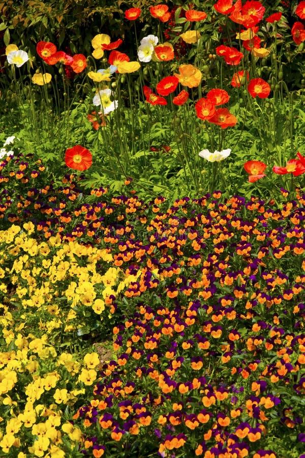 Flowerbed fotos de stock