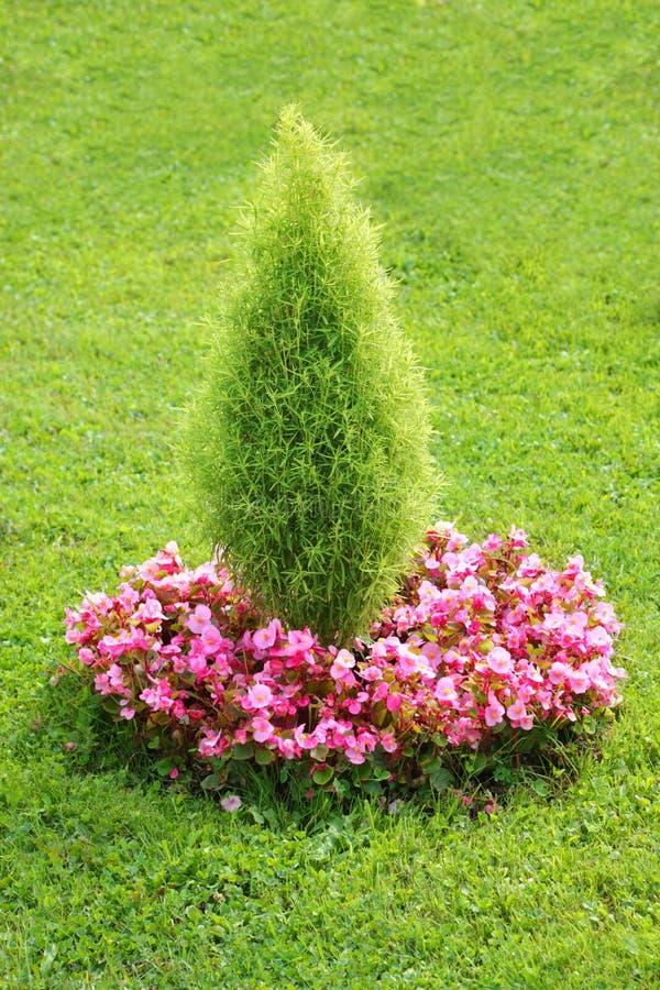 flowerbed стоковое изображение