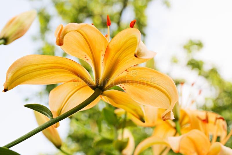 Flowerbed fotografia royalty free
