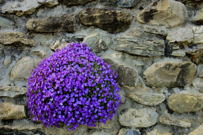 Flowerbed foto de stock royalty free
