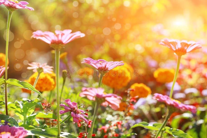 Flowerbed astratto il giorno pieno di sole fotografie stock