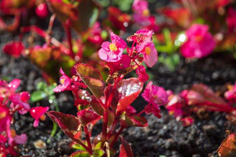 Flowerbed with beautiful flowers in the park royalty free stock photography