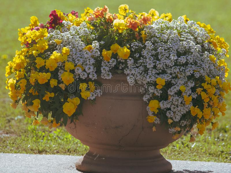 Flowerbed with beautiful flowers in the park royalty free stock photo
