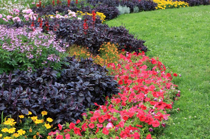 Flowerbed in Budapest. Flowerbed full of flowers in the park, Budapest, Hungary royalty free stock image