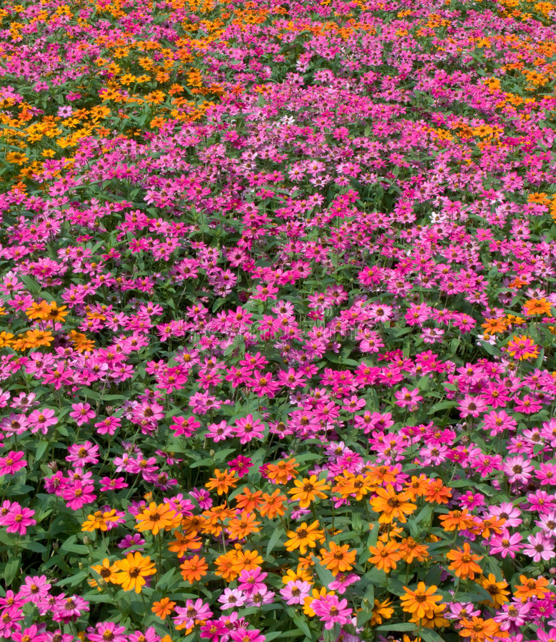 Flowerbed colorido do mar da flor fotos de stock royalty free