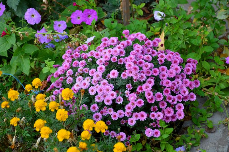 Flowerbed of flowers of different colors. stock photography