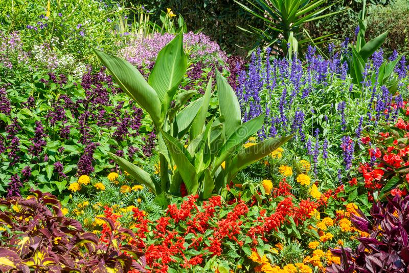 Flowerbed in the garden royalty free stock photos