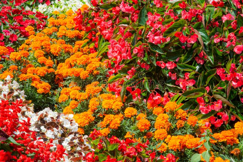 Flowerbed in the garden stock photos