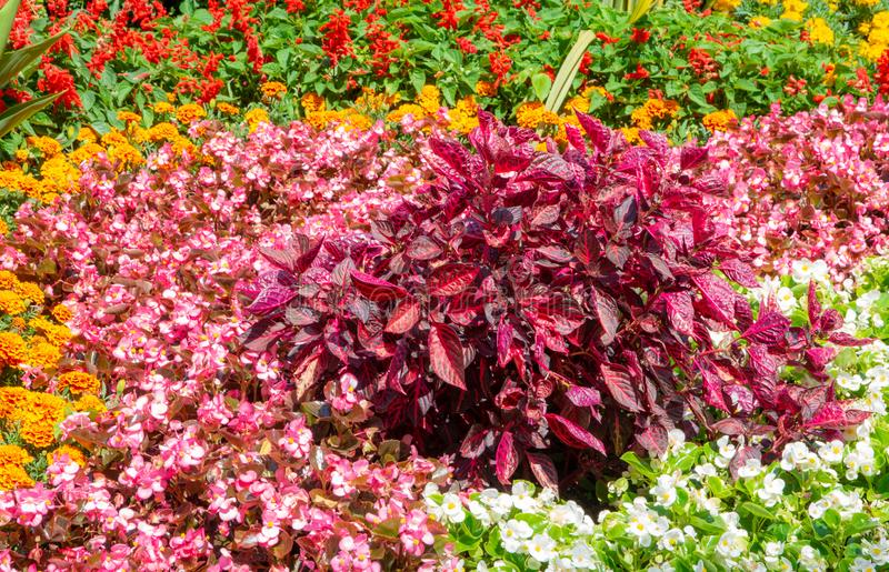 Flowerbed in the garden royalty free stock image