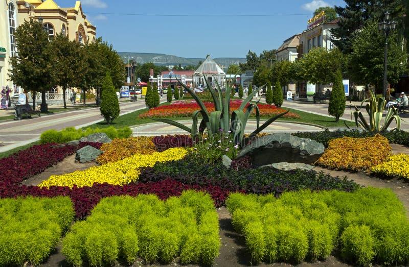 Flowerbed in Kislovodsk. stock photo