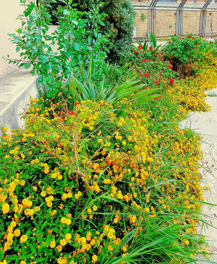 Flowerbed kwitnący zdjęcia stock