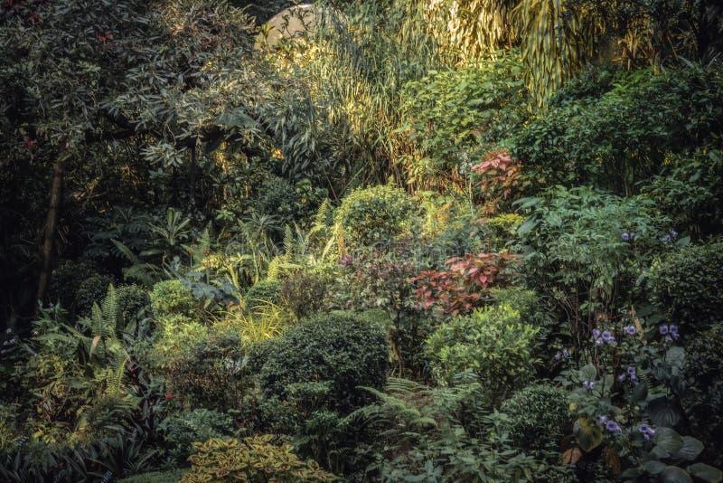 Flowerbed in lush garden with landscape design in Royal Botanic Garden Peradeniya in Sri Lanka nearby Kandy. Surroundings stock photos