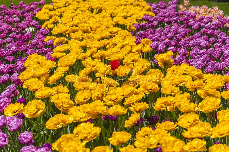 Flowerbed multicolored in garden landscape royalty free stock photo