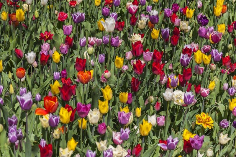 Flowerbed multicolored in garden landscape stock photos