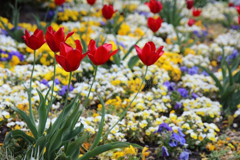 Flowerbed in a public Park in Hamburg. Germany stock image